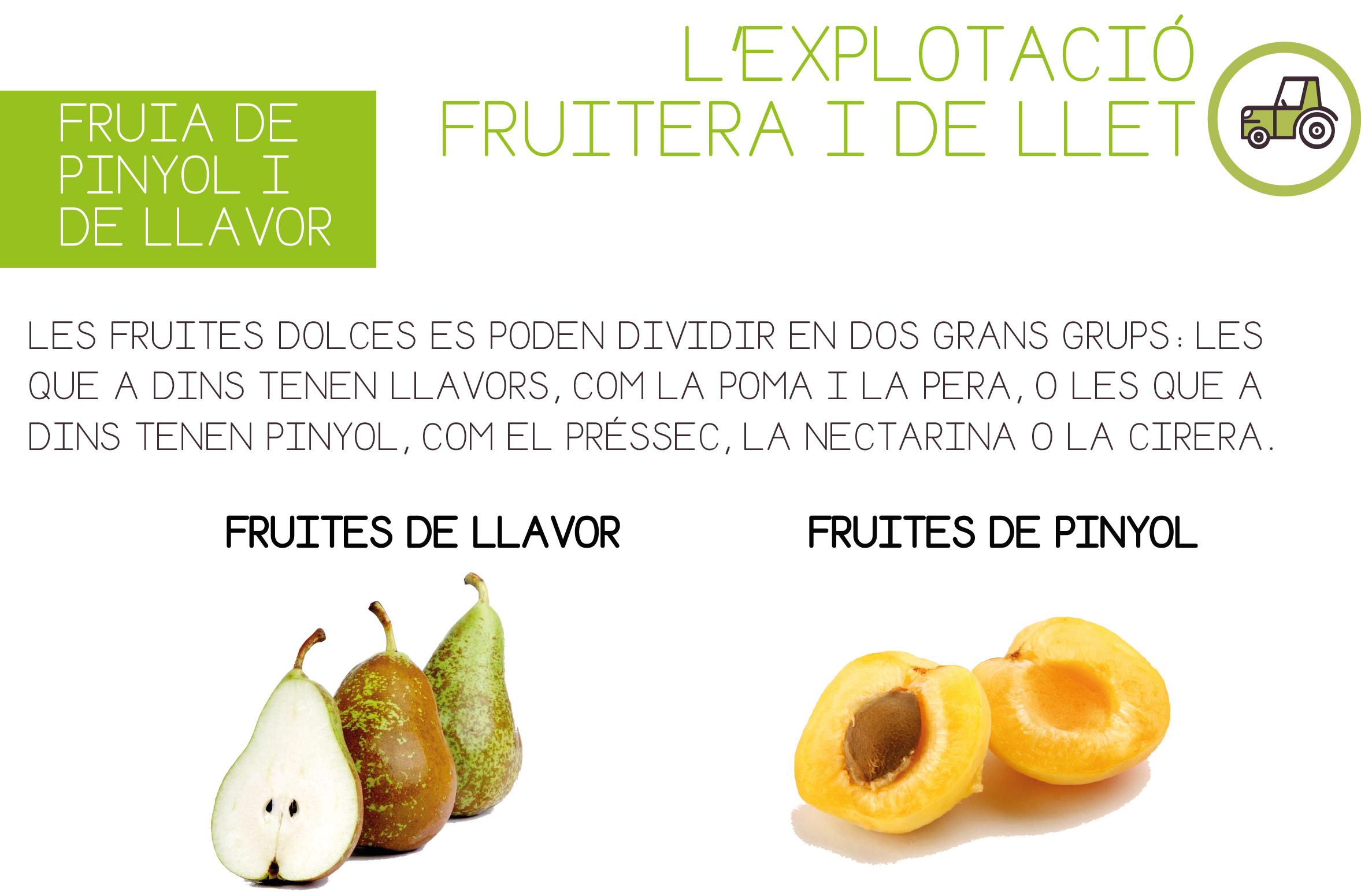 CI-2.2.bis. fruita llavor i pinyol